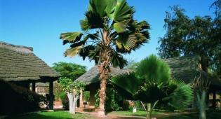Hotel Royal Decameron Baobab