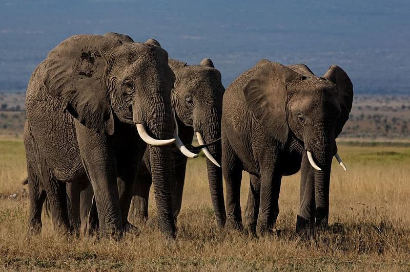 Safari Tsavo West