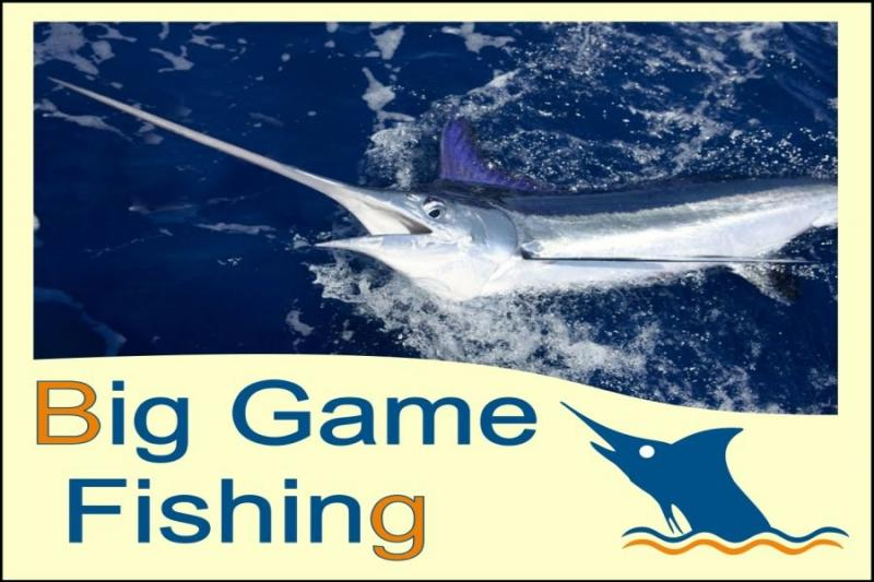 Big Game Fishing - Hotel Club Acuario