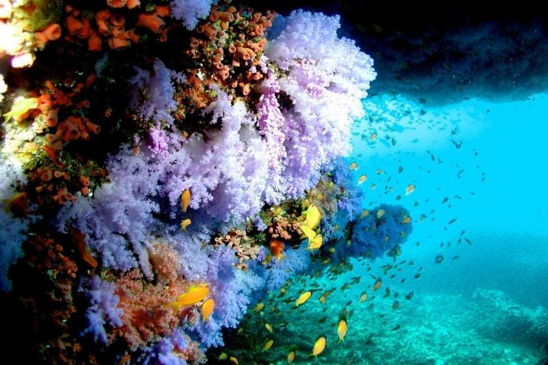 Sun Aqua Vilu Reef